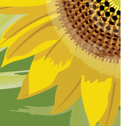 Vector drawing of a sunflower