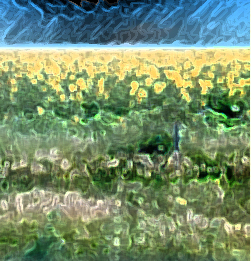 Photo of a field of sunflowers using a glowing edge photo style manipulation.
